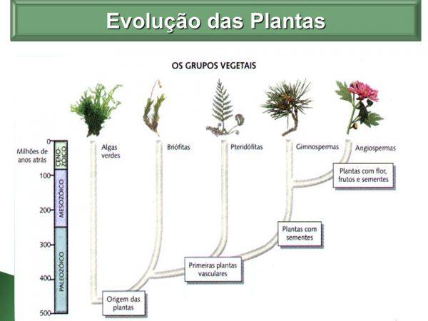 Filos das plantas e evolução