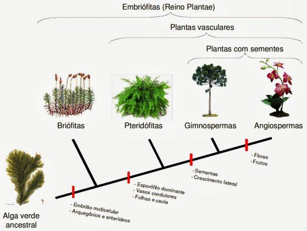 Evolução das plantas por características