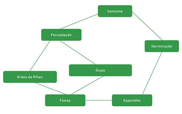 Resumo do ciclo reprodutivo das Angiospermas