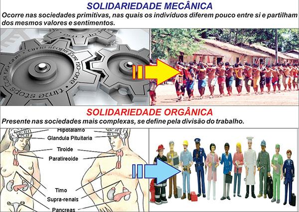 Solidariedade Mecânica e Orgânica