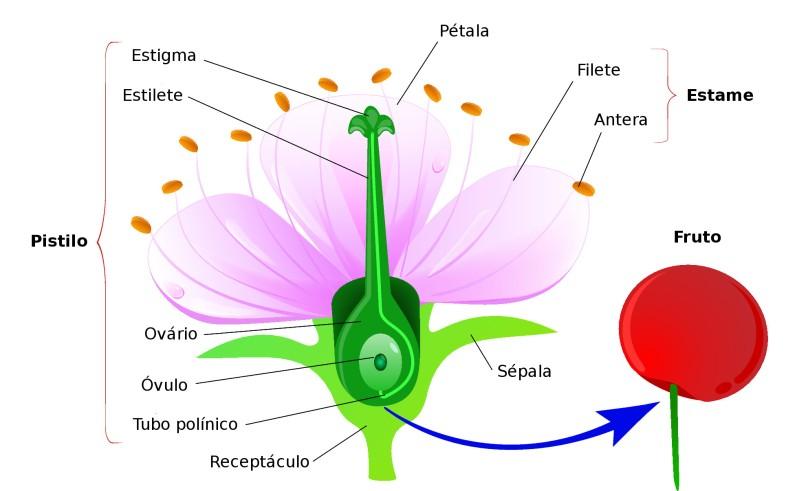 Estrutura da Flor: Características